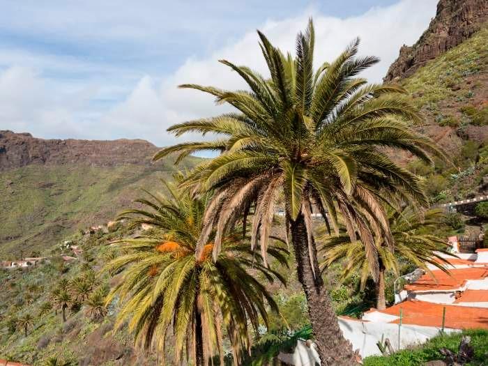 Maison de vacances im Dorf Masca - F7110 (2455925), Masca, Ténérife, Iles Canaries, Espagne, image 19