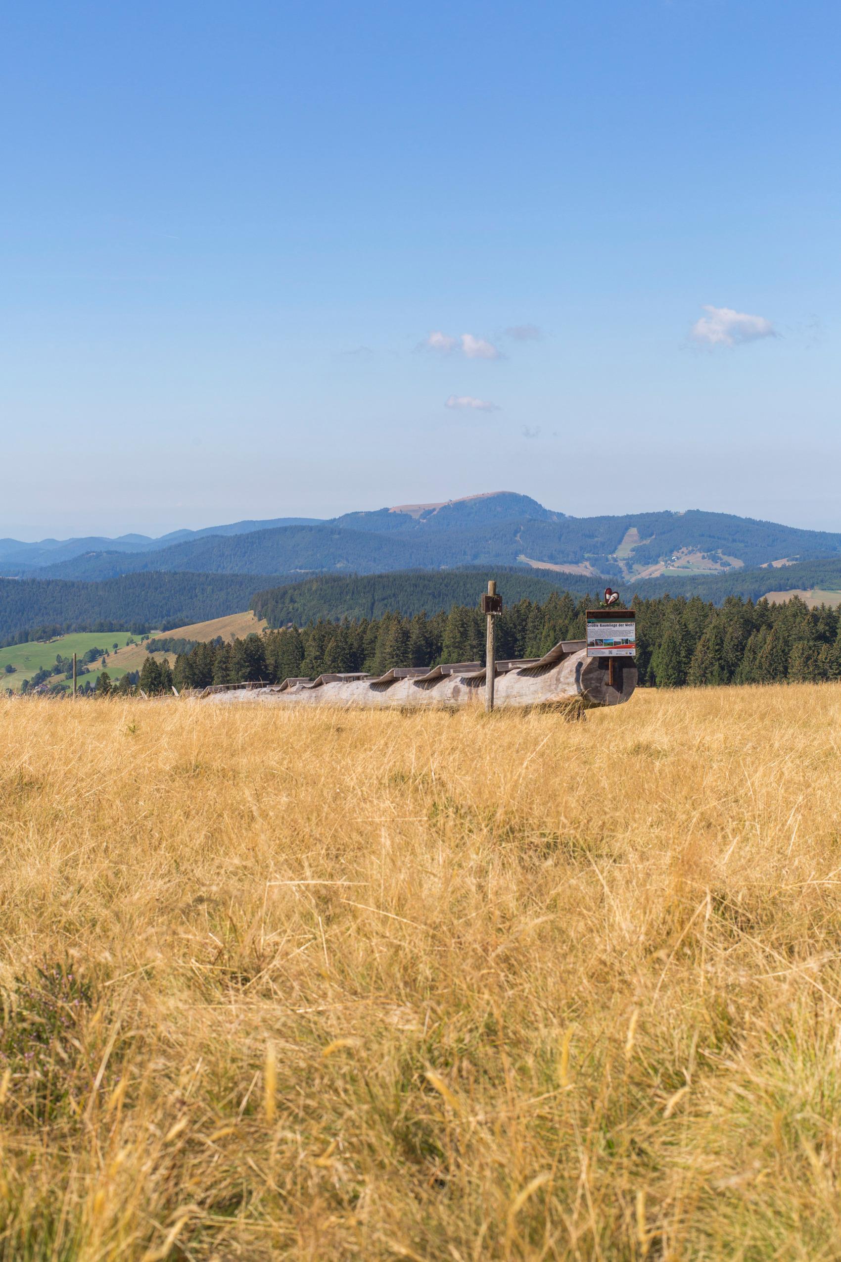 Ferienwohnung Fewo Waldblick- hübsche neu renovierte Fewo- Schwarzwald - Todtnau, Liftverbund Feldberg (2641721), Herrenschwand, Schwarzwald, Baden-Württemberg, Deutschland, Bild 19