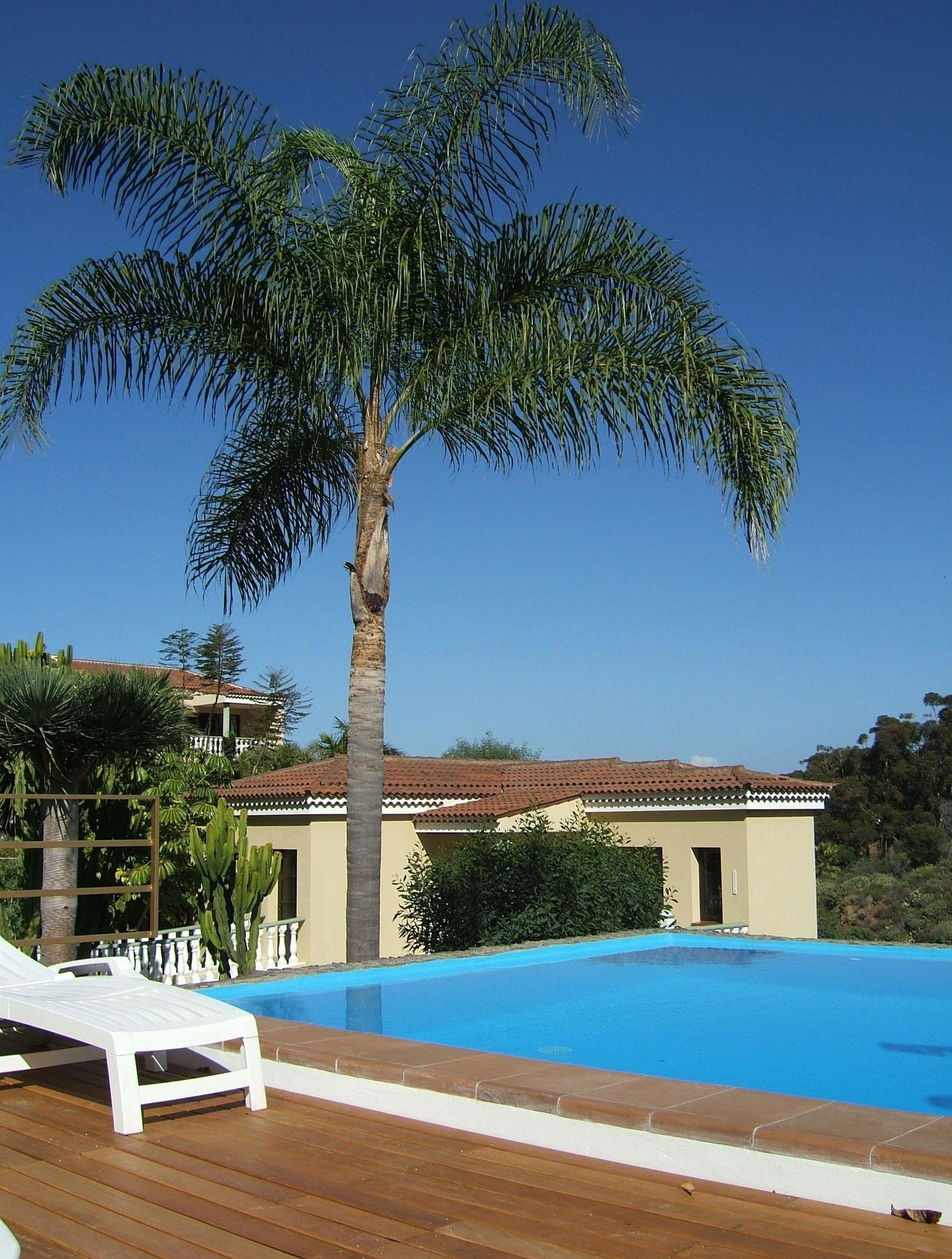 Appartement de vacances Fewo Atico Florasol, sehr ruhig direkt am Naturschutzgebiet, mit Pool, 2 Terrassen, Grill, (2492983), Santa Ursula, Ténérife, Iles Canaries, Espagne, image 1