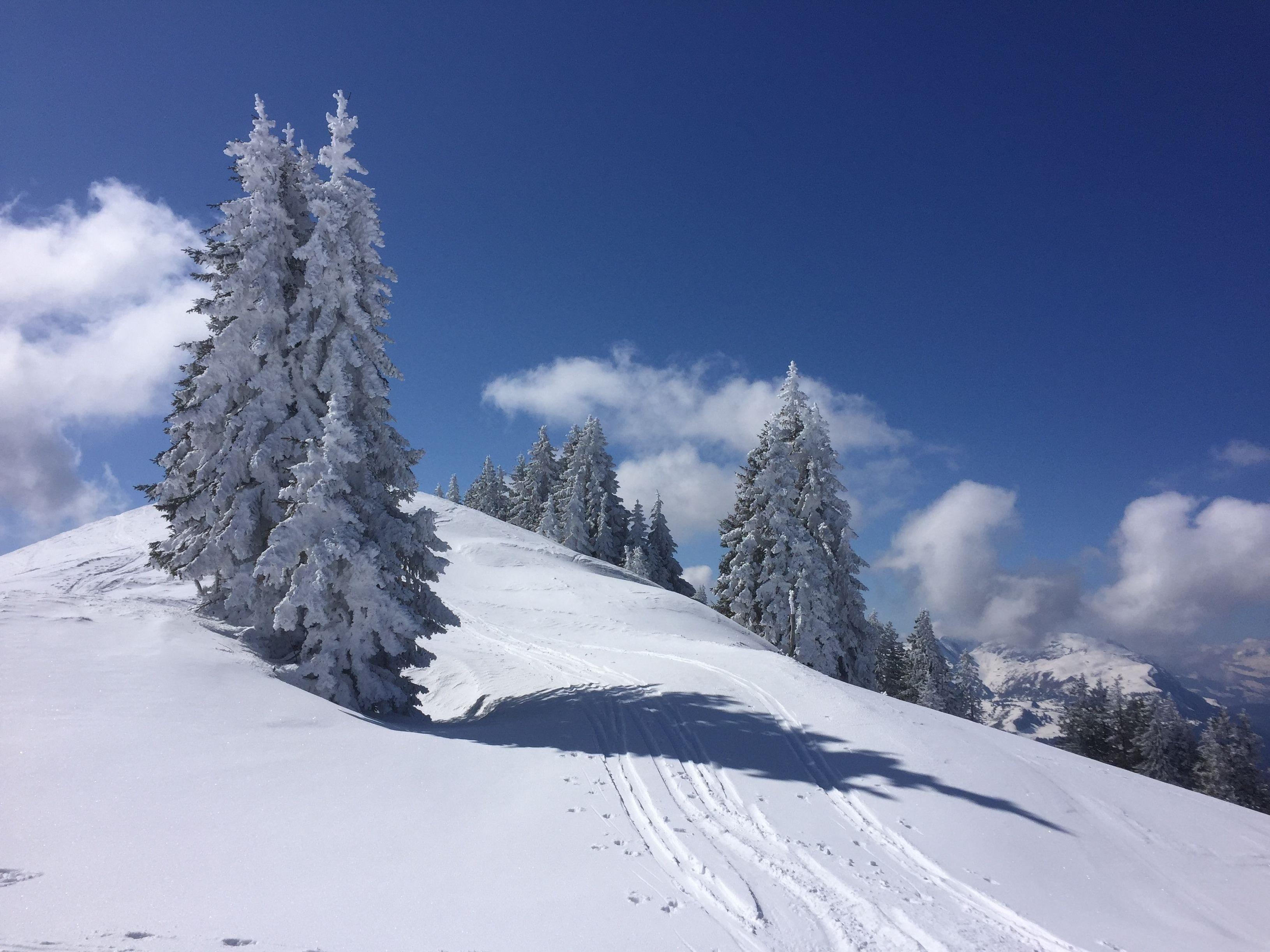 Ferienwohnung Hoch Ybrig (2798110), Oberiberg, Schwyz, Zentralschweiz, Schweiz, Bild 25
